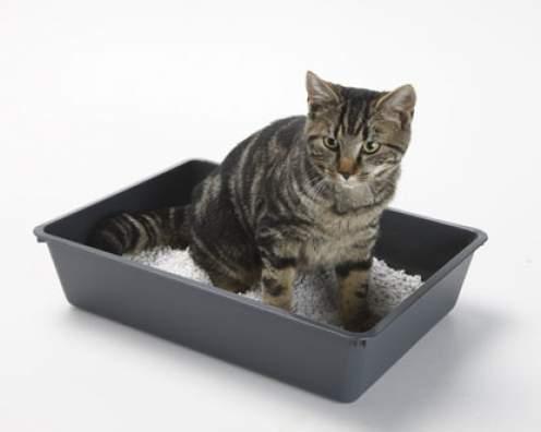 Blaasontsteking-kat