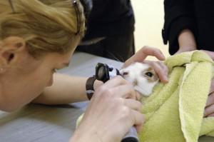 Gebitsinspectie-bij-een-konijn