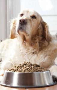 Hond-eet-niet