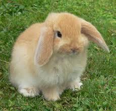 Klein-konijntje