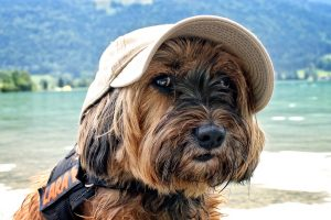Leishmania-bij-honden-op-vakantie