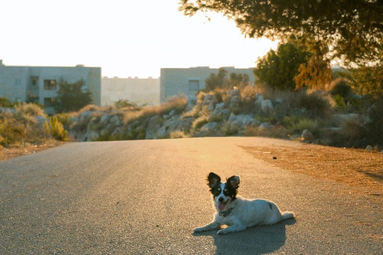 hond-op-vakantie-ehrlichia