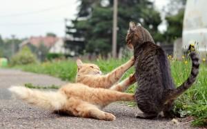 kattenaids