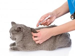 kattenziekte-kat