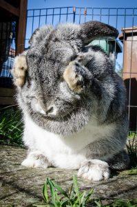 konijn-niest-wassen
