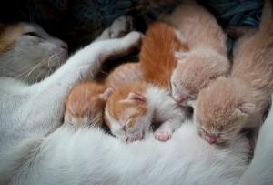 moederpoes-kittens