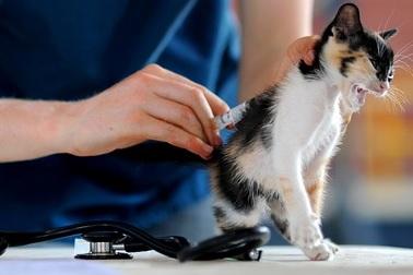 vaccinatie-kitten